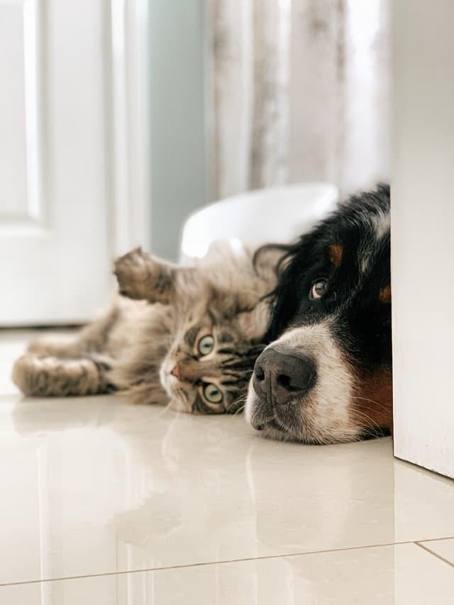 3 HVAC Maintenance Tips for Pet Owners in Queen's Ridge